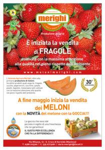 Nicola Galetti Grafico Mantova Freelance, Meloni